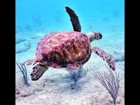 Pompano Beach Snorkeling 5 18 16HD