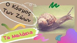 Ο Κόσμος Των ζώων - Τα Μαλάκια (Mollusca)