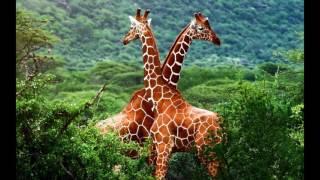 картинки животных:3