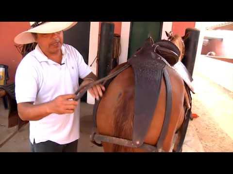 Caballo Peruano de Paso, criadero de Backus