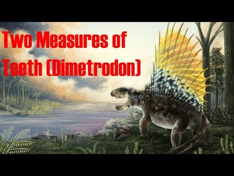 Dimetrodon Predator of the Permian
