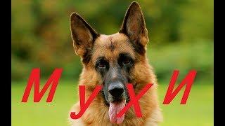 Как спасти УШИ собак от МУХ ! Лайфхак !