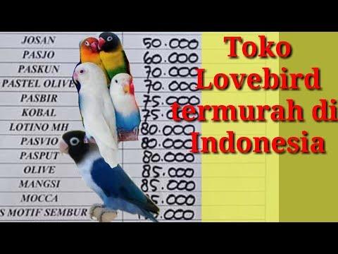 Update! Daftar Harga Lovebird Termurah 2019 Di Indonesia    Harga Lb Terbaru Terlengkap