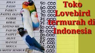Update! Daftar harga Lovebird termurah 2019 di Indonesia |  harga lb terbaru terlengkap