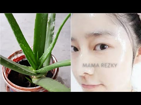 Memutihkan Wajah Secara Cepat Menggunakan Lidah Buaya Mama Rezky Youtube