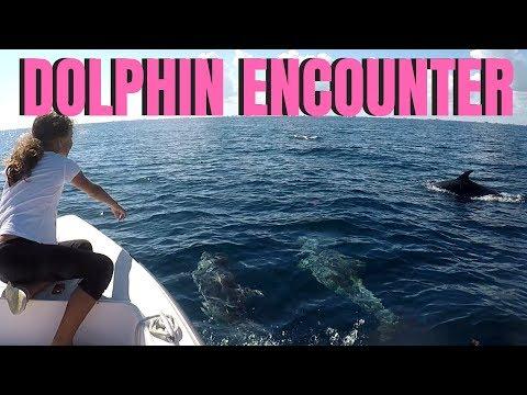 South Florida Fishing Girl: Offshore TUNA Fishing & Dolphin Encounter