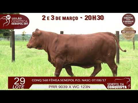 LOTE 29 CONQ 568