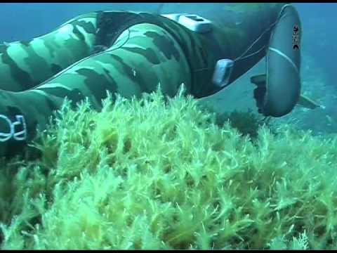 [Documentario] -tecniche di  Pesca Sub - Nei primi Quindici Metri sardegna 2011