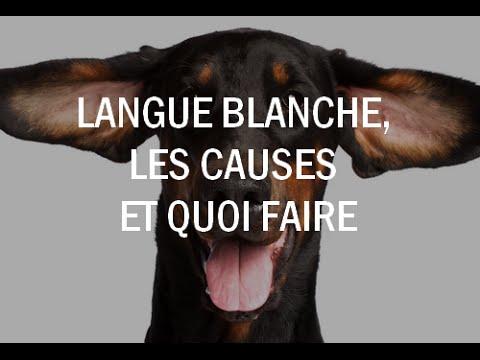 langue blanche foie fatigué