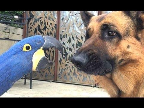 Весёлые Попугаи и забавные собаки. Сборник - [NEW HD]