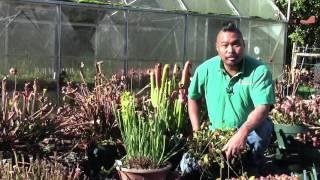 Carnivorous Plant Care for November 2016