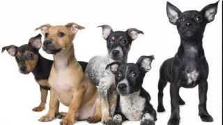 Secrets to Dog Training - Learn to teach your dog how to behave!