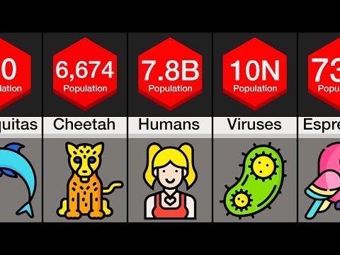 Comparison: Animal Populations