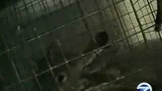 KGO-TV investigation of pet stores