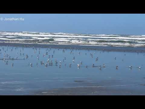 Ocean Shores | Pacific Ocean Beach