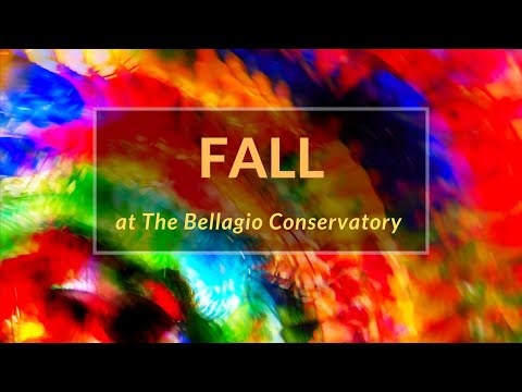 Fall 2019 at the Bellagio Conservatory: Things To Do in Vegas