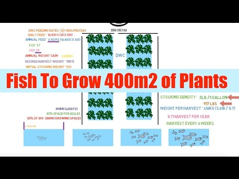 Fish Required To Grow 400m2 Of Plants | Ask The Aquaponics God Ep34