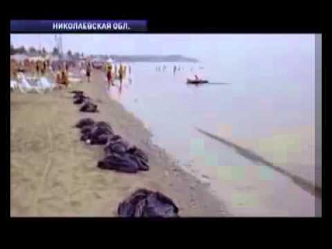 Черное море, выброс сероводорода в Коблево, 2010 год
