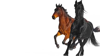 Download Old Town Road Remix feat. Billy Ray Cyrus 1 Hour Version Mp3 and Videos