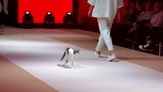 Кошка вторгается в показ мод и учит моделей как нужно ходить по подиуму!