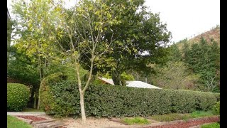 Plantación y cuidados del nogal - Bricomanía