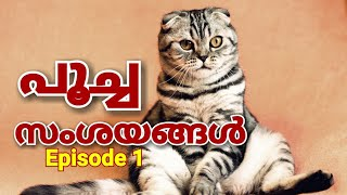 Persian Cat caring tips questions and answers Malayalam | പൂച്ച സംശയങ്ങൾ Episode 1 #mehrinscatvlog