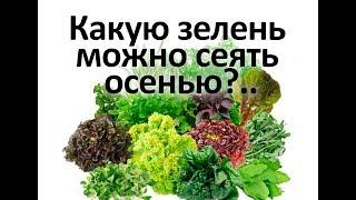 Какую зелень можно сеять осенью  Секрет от агронома Кирюшина
