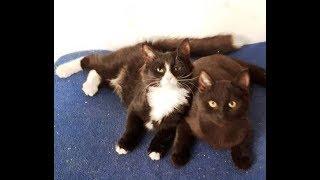 Чёрные котята в добрые руки