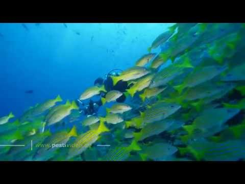 Cocos Island MV Yemaya October 2014
