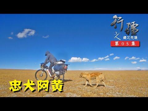 行疆 藏北莽原05 荒野里遇金毛流浪狗阿黄跟随,路艰苦不得不分别托付藏族小男孩丨单人单车骑行中国纪录片