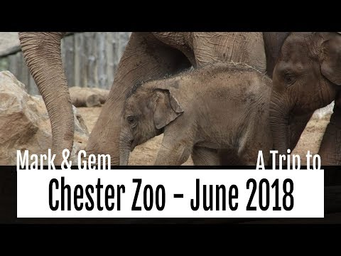 A Trip to Chester Zoo - June 2018