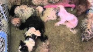 Allegan Puppy Mill Raid, Mi (ga1).m4v