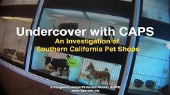 Undercover with CAPS: An Investigation of Southern California Pet Shops