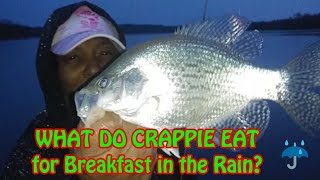 WHAT DO CRAPPIE EAT in the Rain? Early Morning CRAPPIES Fishing Crappie Town USA Baby