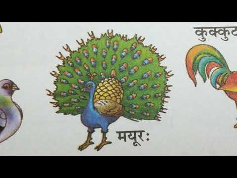 Birds Name In Sanskrit;pakshiyo Ke Naam Sanskrit Mai;monikaallclasses;Sanskrit For All Classes