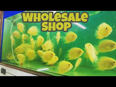 Kurla Fish Aquarium Shop LIVE| Wholesale Price in Mumbai India