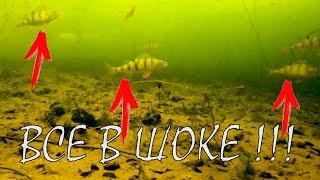 Реакция рыбы на КУЧУ мормышек!!! Подводная съемка. Зимняя рыбалка 2018