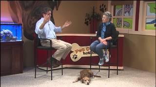 Pet Owner's Hotline: Obedience Club Of Daytona Beach