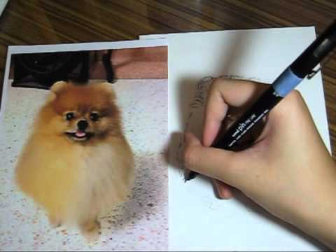 boysandgirls drawing tutorial 01 pomeranian