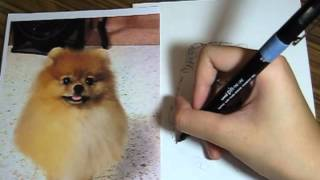 boysandgirls drawing tutorial 01 : pomeranian