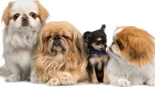 How To Choose a Puppy: Tips on How to Pick a Puppy http://bit.ly/ZY...
