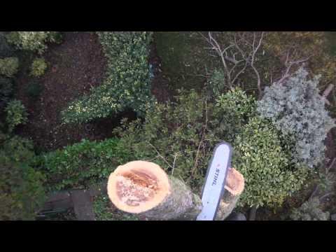 Robinia removal