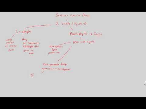 PD I - Seedless Vascular Plants