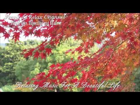 Relaxing Music For A Beautiful Life Vol 5. Nhạc Hòa Tấu cực hay và Relax