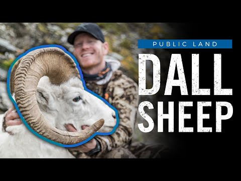 9 Day Public Land Dall Sheep Hunt In Brooks Range!