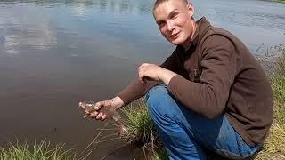 Рыбалка на сазана Клёв в 2 х метрах от берега
