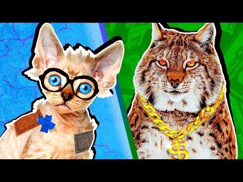 Вопрос: Кража котов наказуема?