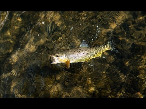 Catching Fish On A Fly Rod In The Middle Of Winter [UTAH]