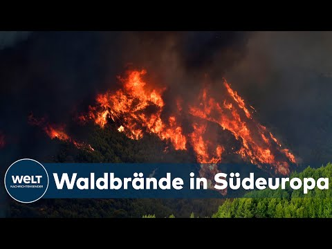 HITZE & DÜRRE: 'Ganz Griechenland ächzt unter der enormen Hitze' | WELT INTERVIEW