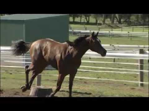 Racehorse Filly By Dash For Cash From Zedita
